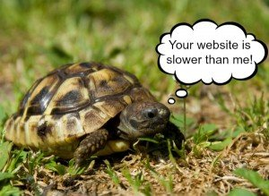 Your Website is Slower than this Turtle